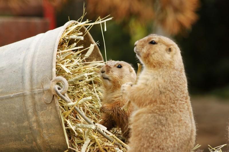 Zoo-Kurs | Fotokurs im Zoo Hannover