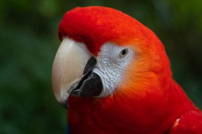 NEU: Tierfotografie-Kurs im Weltvogelpark Walsrode