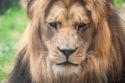 Zoo-Fotokurs